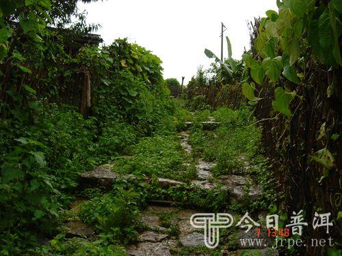 易武/慢撒茶山位于勐腊易武乡东北,紧接老挝边境。